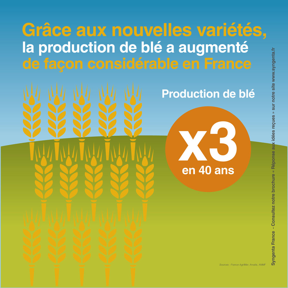 Infographie la production de blé