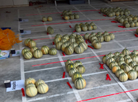 expo-melons