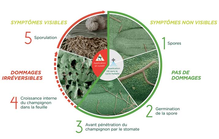 Fiche PFR cycle complet