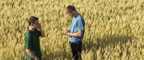 Discussion tour de plain entre agriculteur et technicien